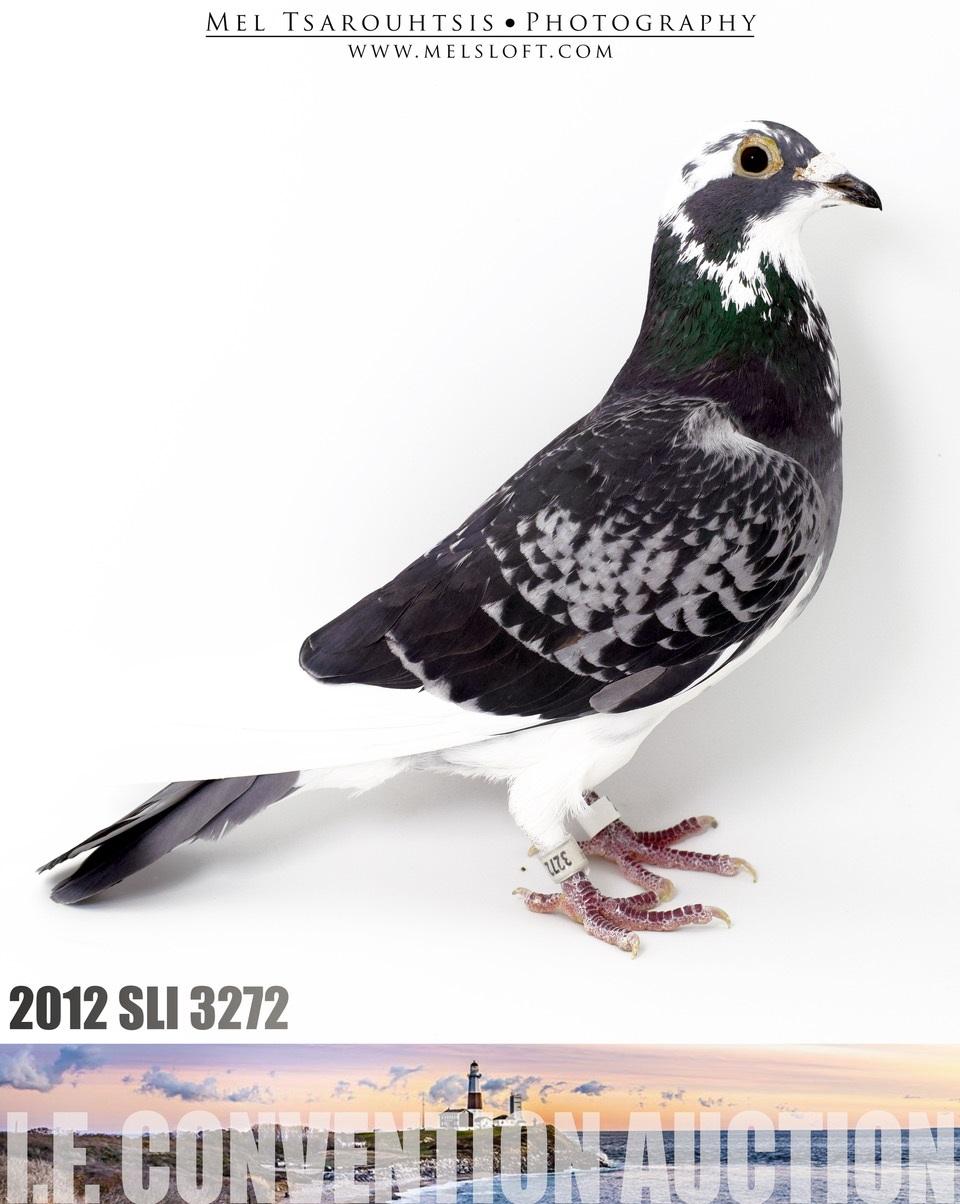 Lot # 2 IF 12 SLI 3272 BCS Hen