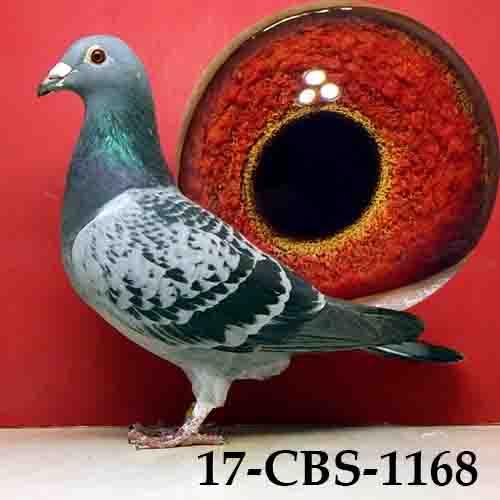 17-CBS-1168 BC/HEN