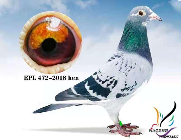 EPL 472-2018 BCSPH