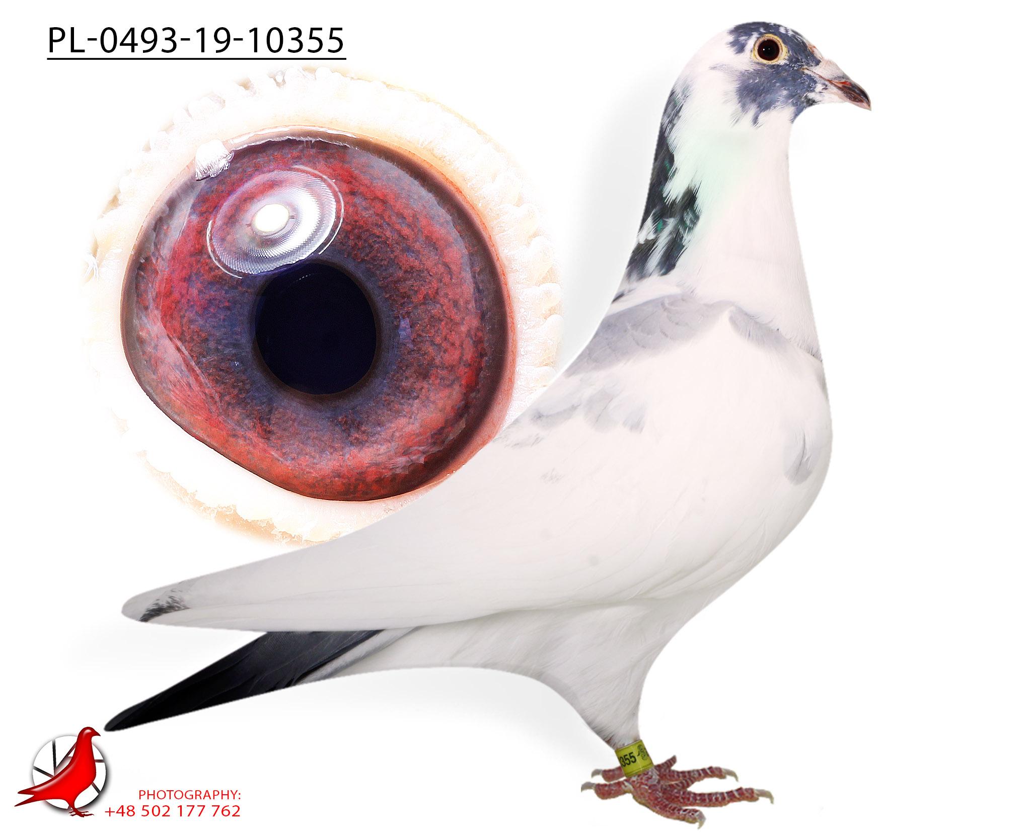 PL-0439-19-10355 BSPL C