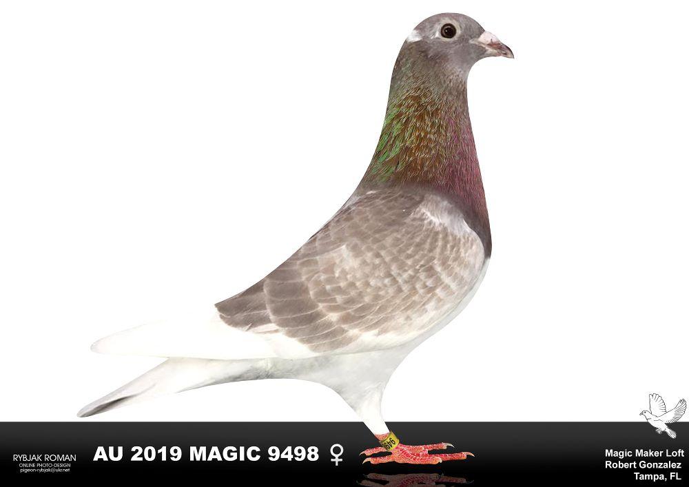 AU 2019 Magic 9498 RC Hen
