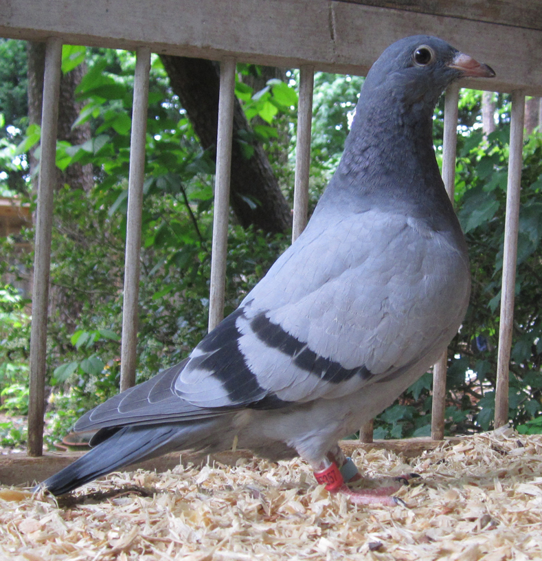 AU-2021-ARPU-65357 Young Bird