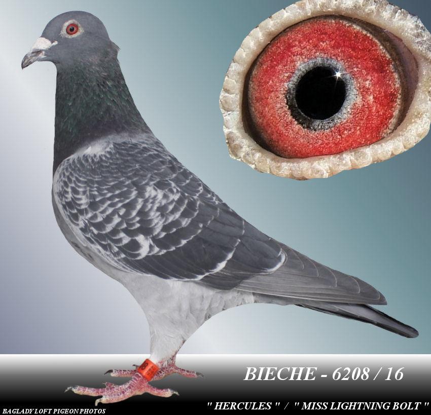 BIECHE - 6208 / 16  BC COCK