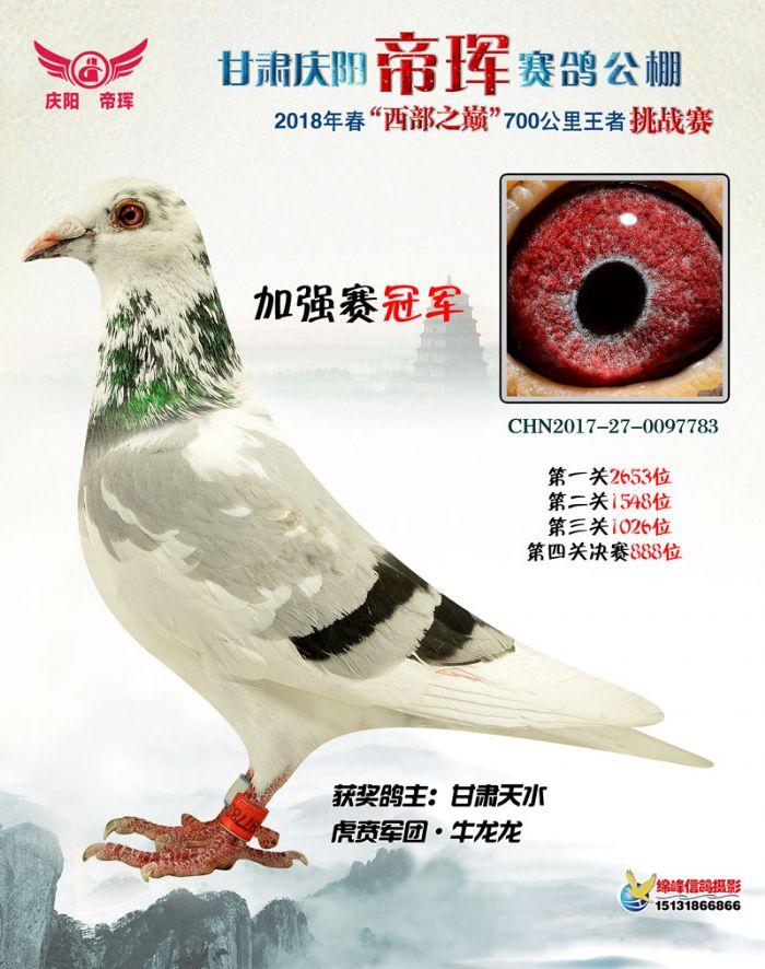 2018 China Gansu Qingyang, Di Hui One Loft Race
