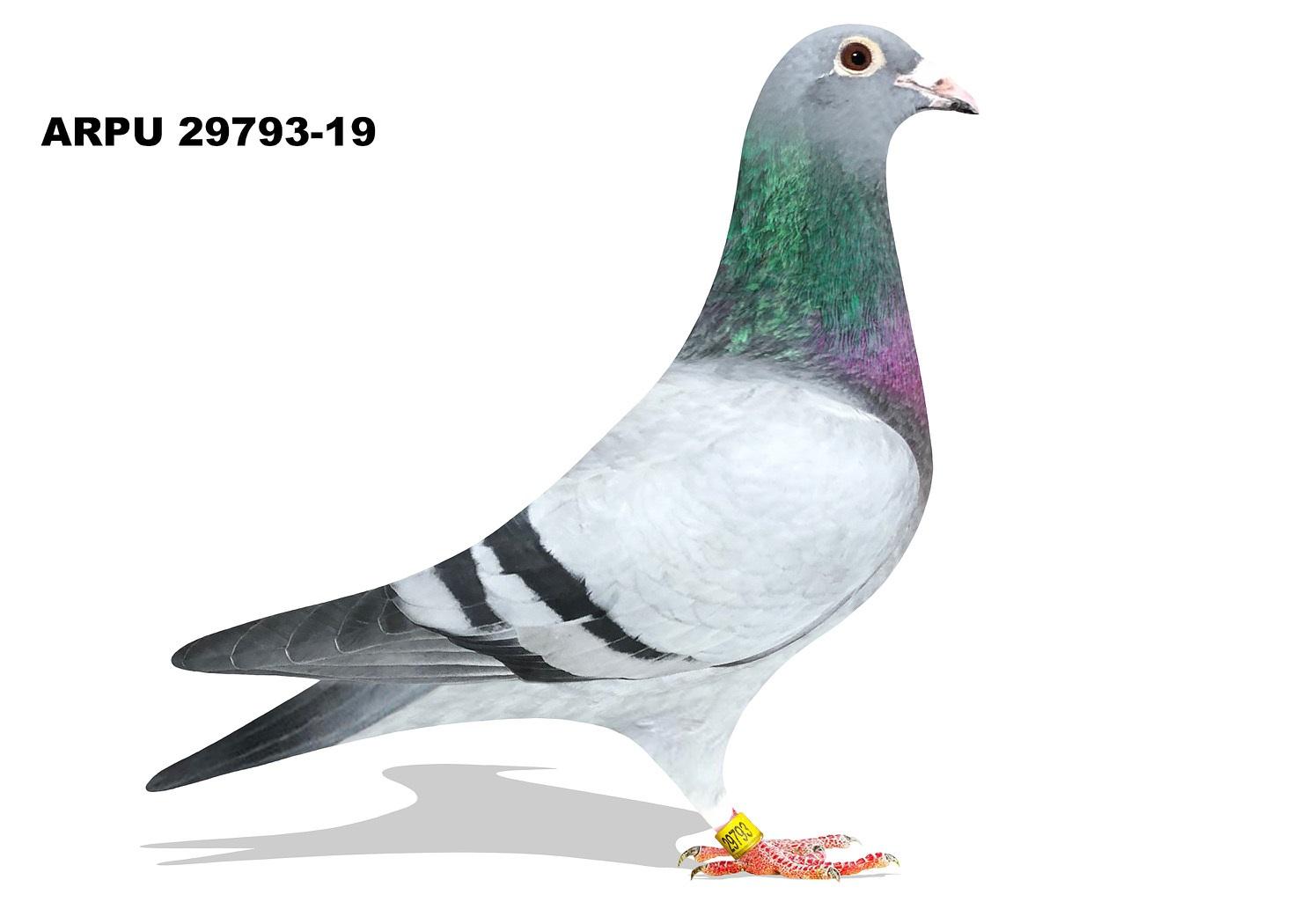 ARPU 29793-19 BBWF Hen (Mix)