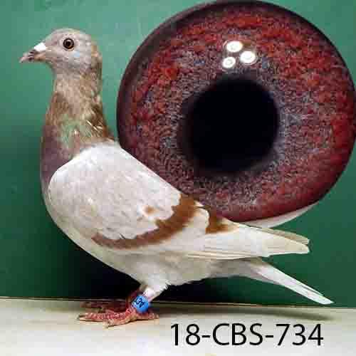 18-CBS-734 SILVER HEN