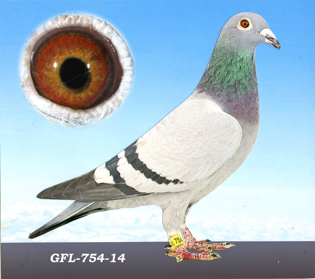 GFL-754-13 BBH