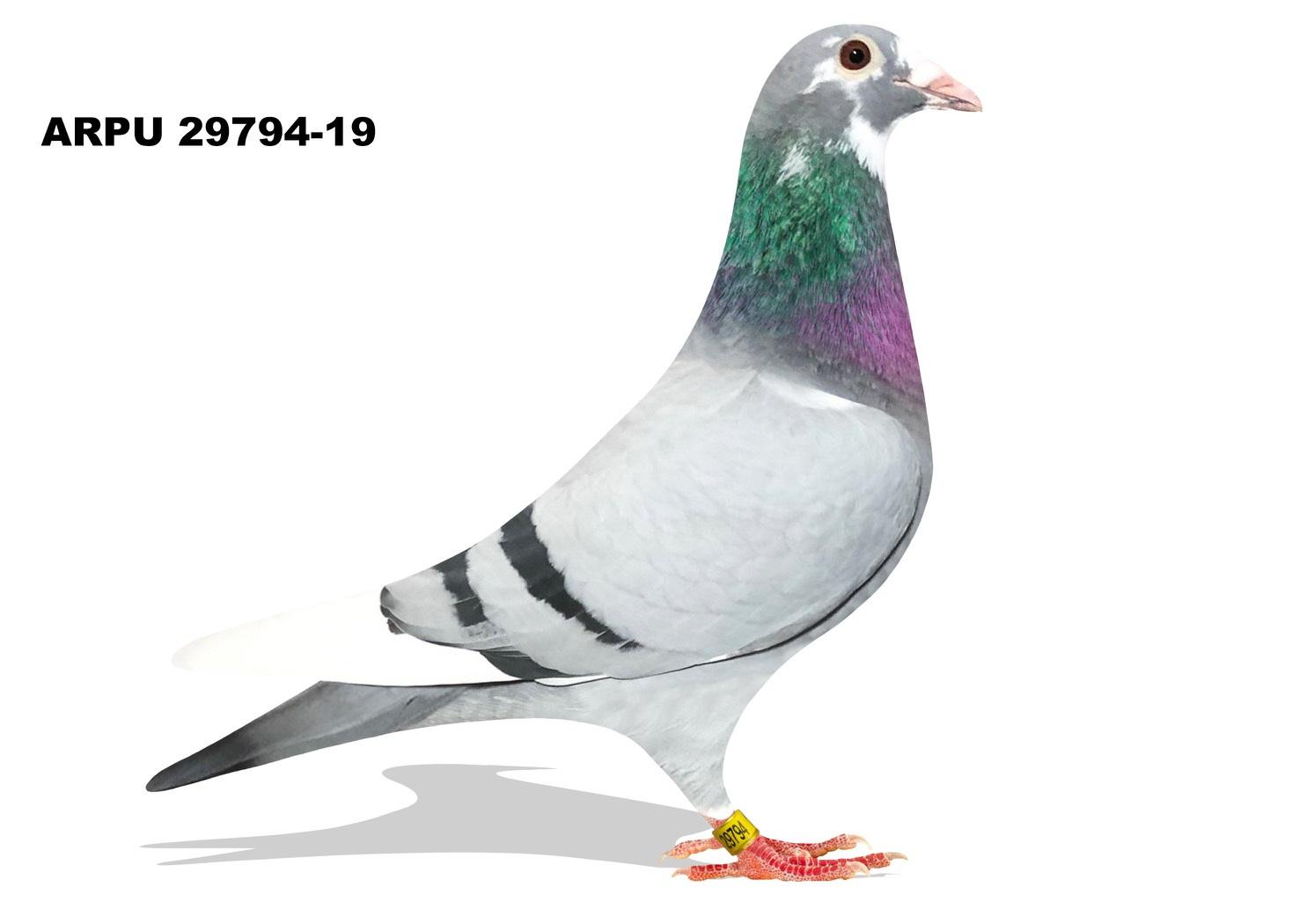 ARPU 29794-19 BBSPL Hen (Mix)