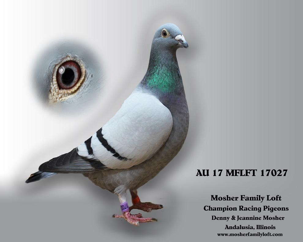 AU 17 MFLFT 17027  Hen