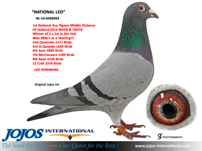1ST NATIONAL ACE PIGEON MIDDLE DISTANCE