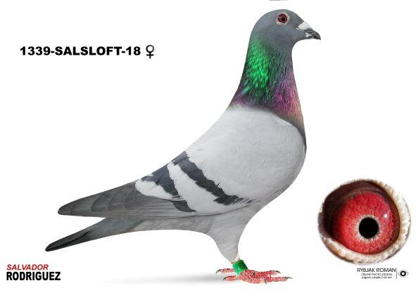 18-SALSLOFT-1339 BB HEN?