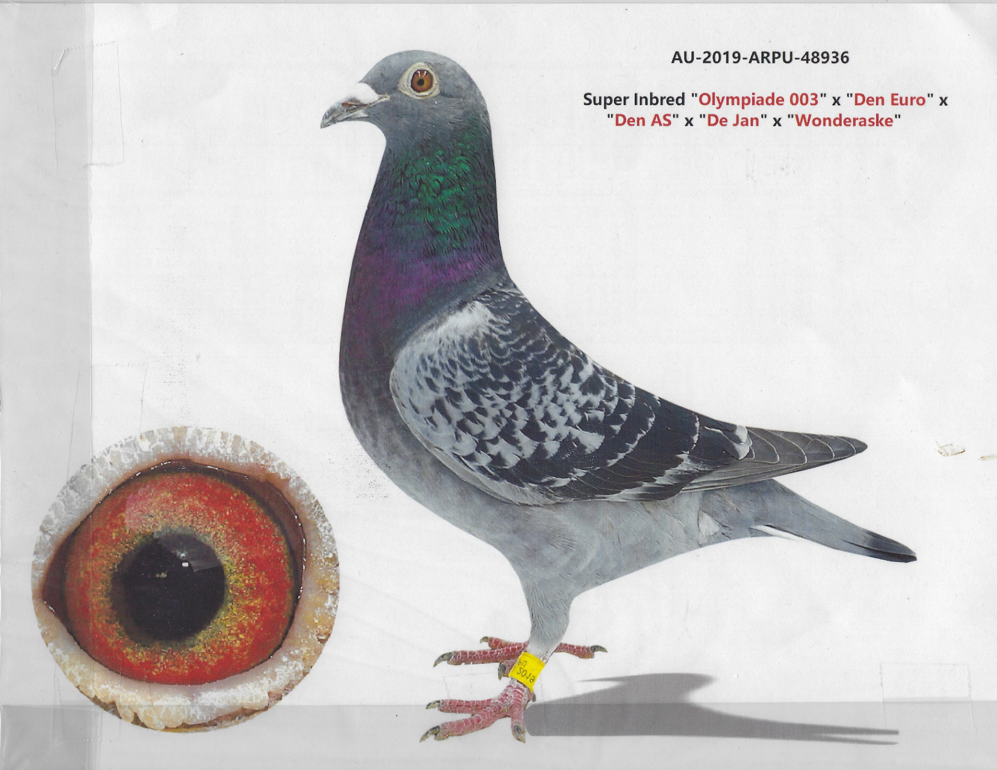AU 2019 ARPU 48936 - BC Hen