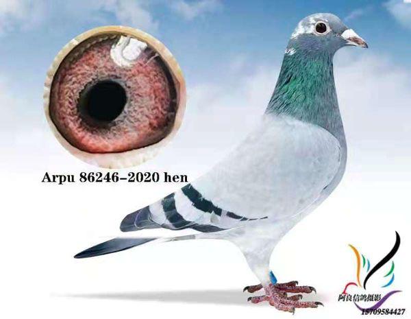 ARPU 86246-2020 BBSPH