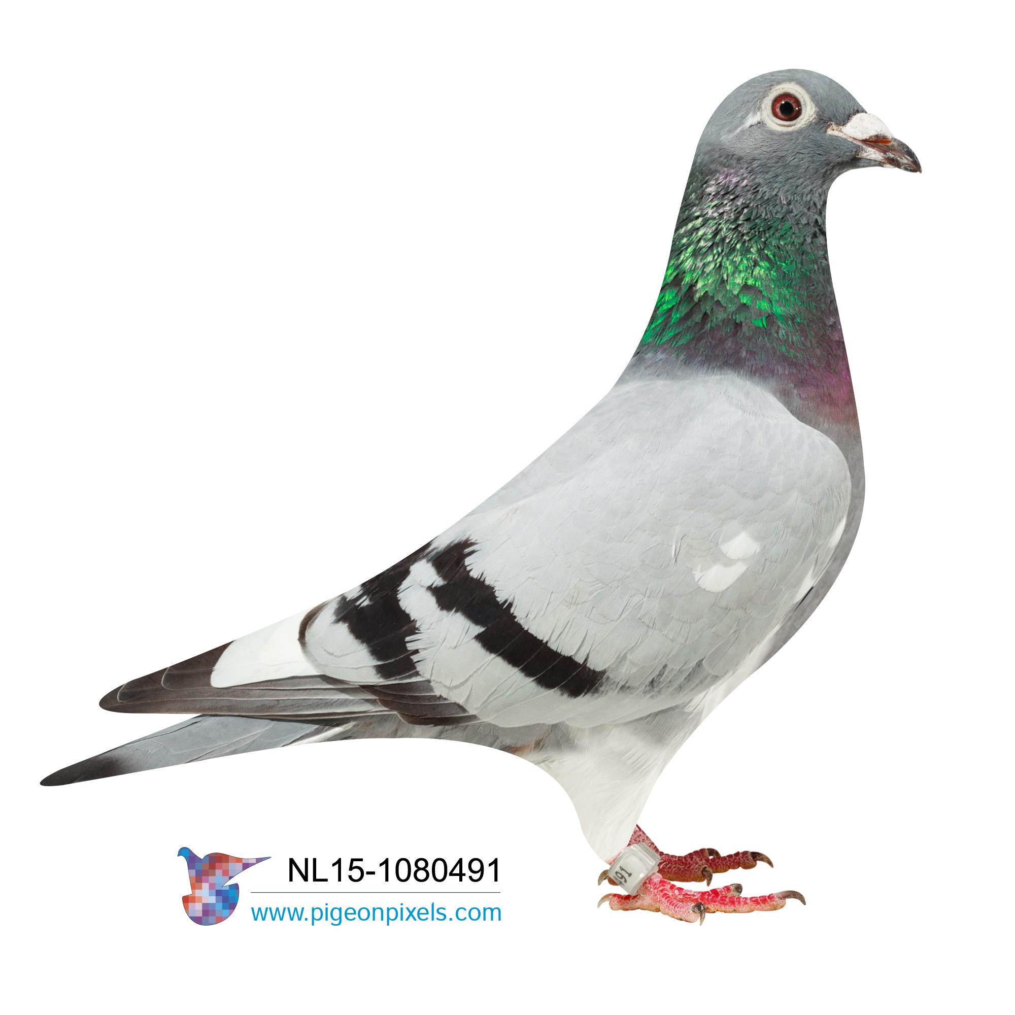 NL2015-1080491 BLUE WHITEFL. HEN, DE KLAK X VAN LOON
