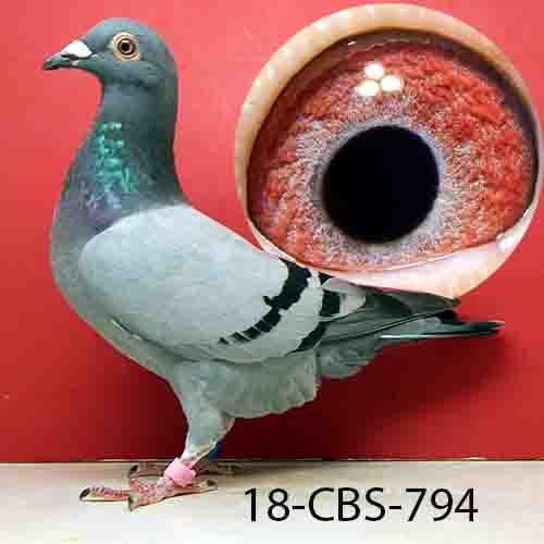 18-CBS-794 BB/HEN
