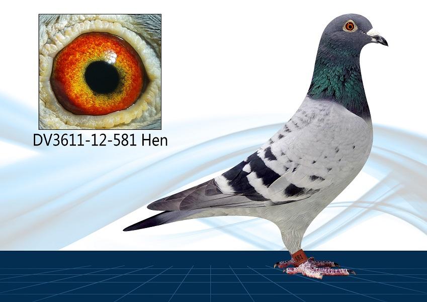 DV3611-12-581 Hen. Direct Lucking Loft,9th vs 2083 Birds 500Km