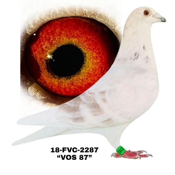 18-FVC-2287 Grizzle Cock.