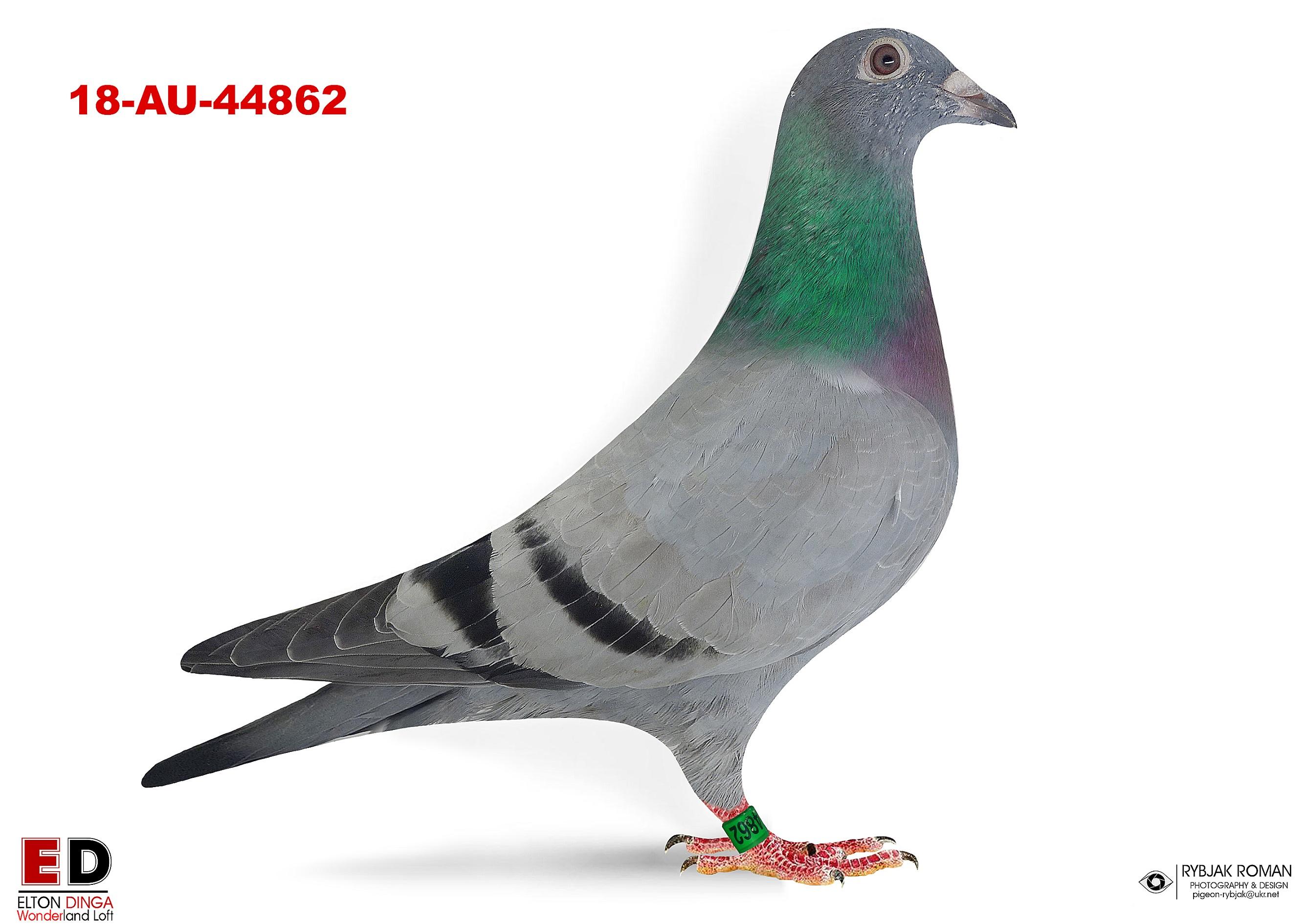 44862 - Sister 3rd Champion Bird - Texas Shootout 18