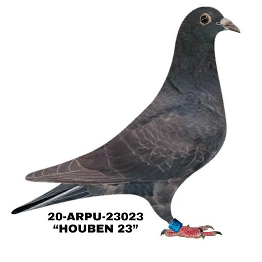 20-ARPU-23023 Black.