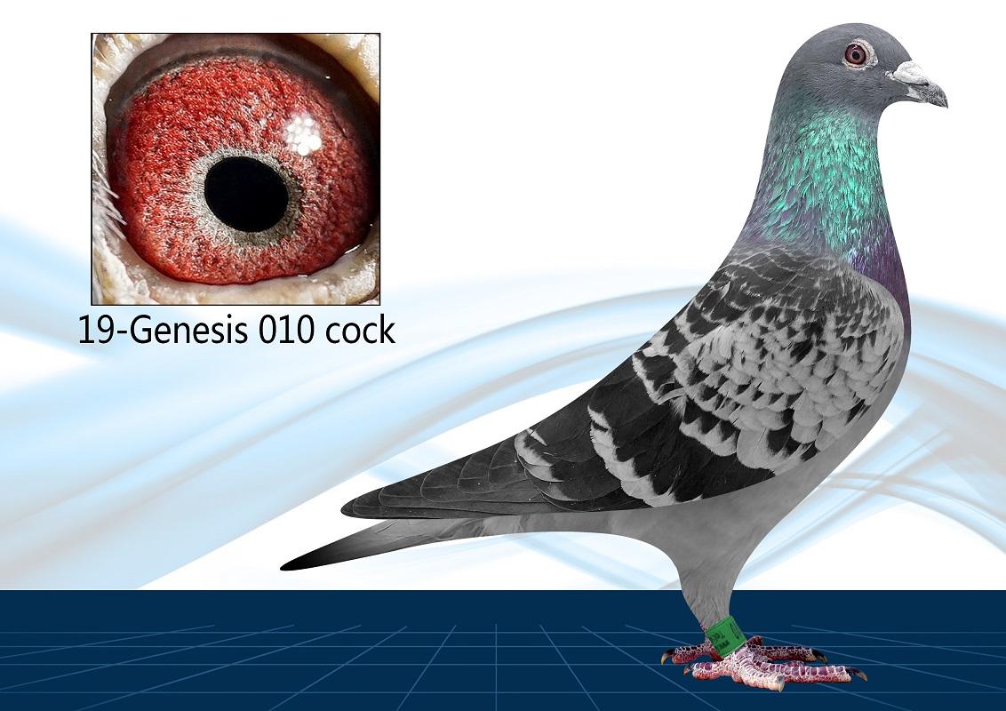 19-010(Cock) 100% Schellens