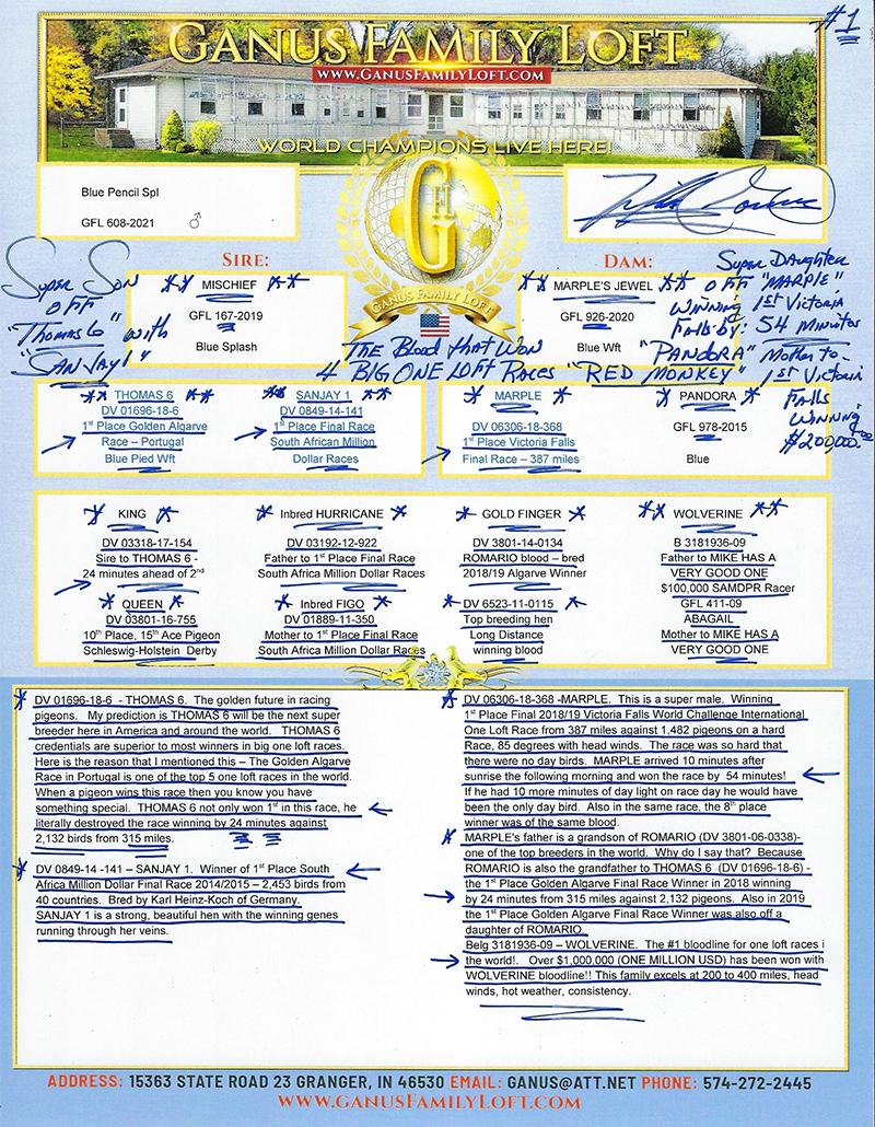 LOT 7GFL 608-21 Blue Pencil Spl Male Grandson of THOMAS 6, SANJAY 1, MARPLE
