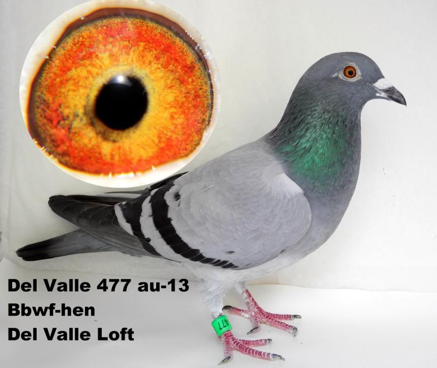 Del Valle 477 au-13 bbwf hen