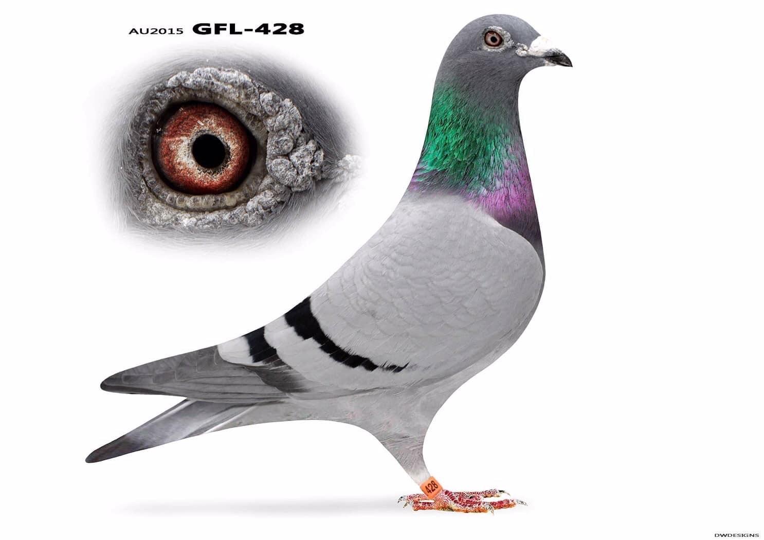GFL-428-2015 Blue Blar C