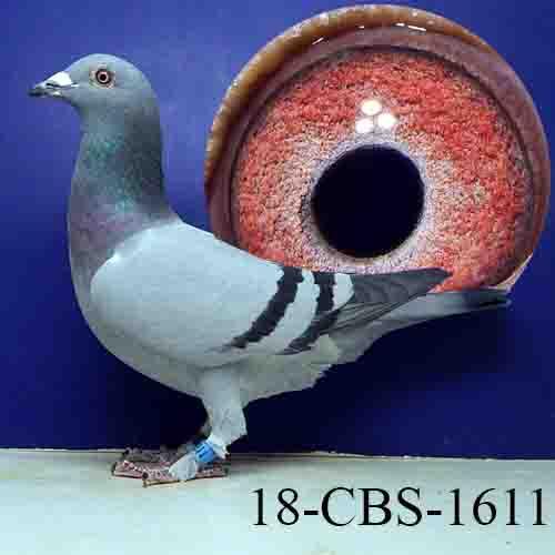 18-CBS-1611 BB/HEN