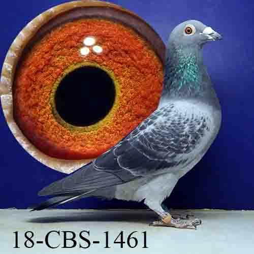 18-CBS-1461 BC/COCK