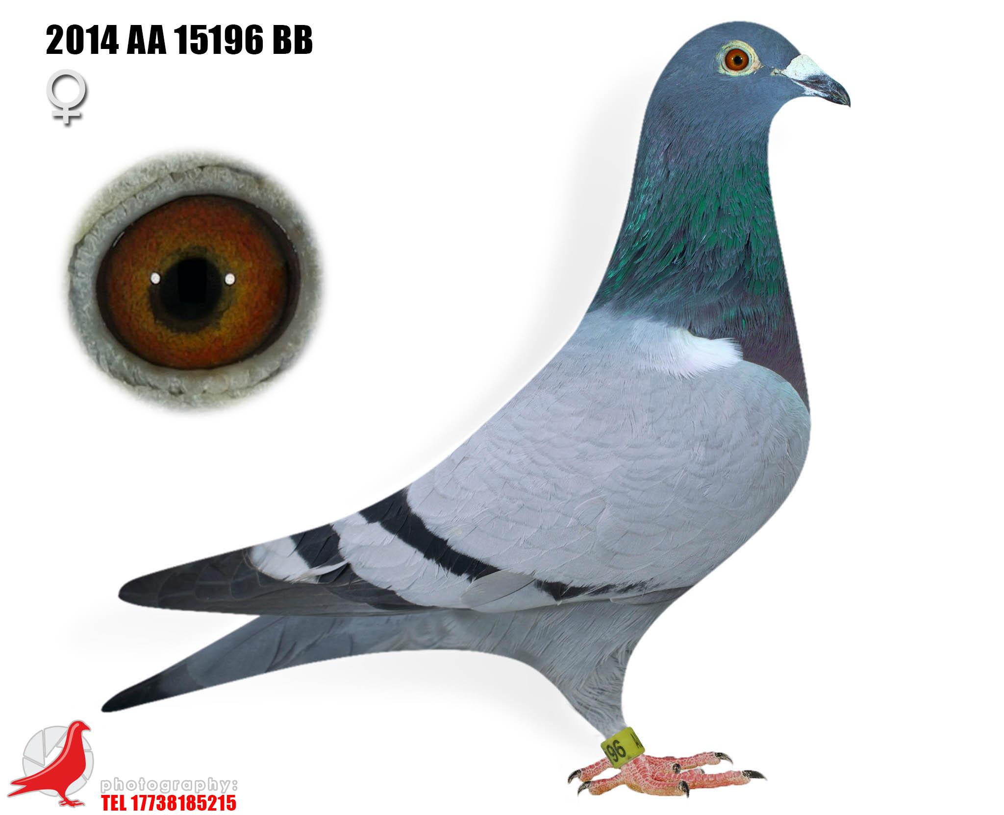 2014 AA 15196 BB H