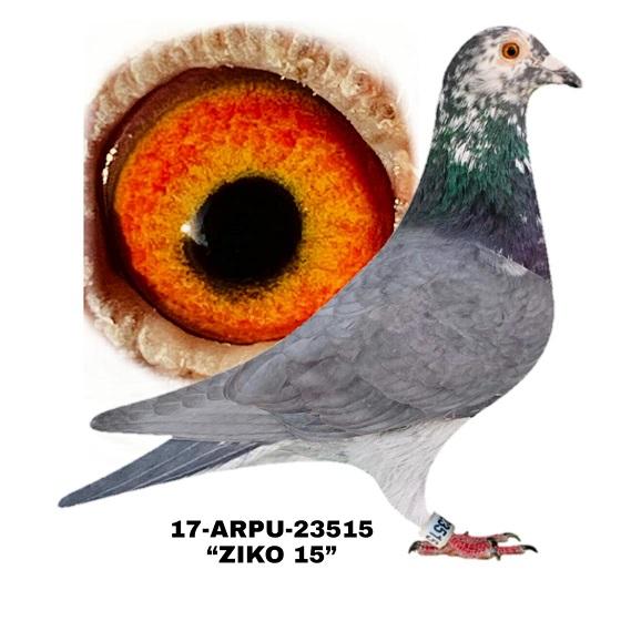 17-ARPU-23515 Black SPL Hen.
