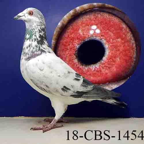 18-CBS-1454 Grizzle cock