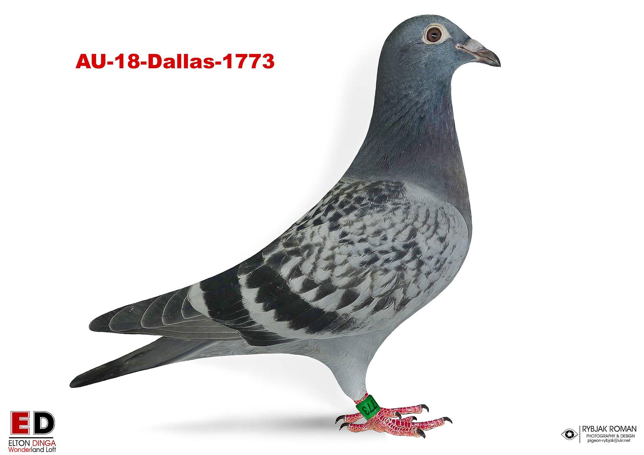 18-1773 Hen, Hok Jos Vercammen