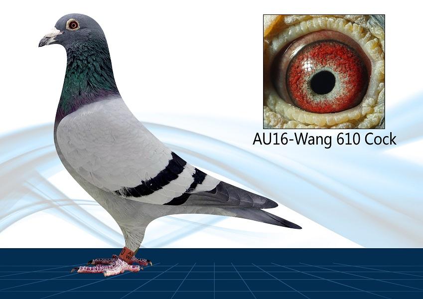 AU16-WANG 510(Cock) Lil Bourge x Lady Kannibaal