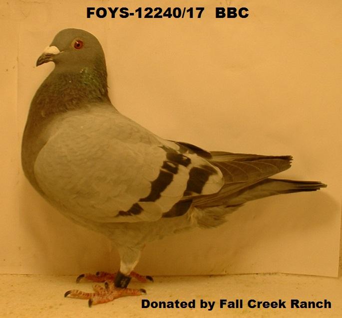 FOYS-12240/17 BBC