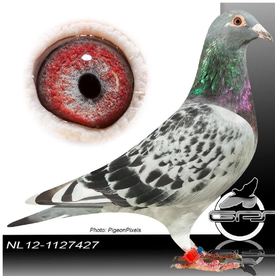 NL 1127427-12 BCWFH
