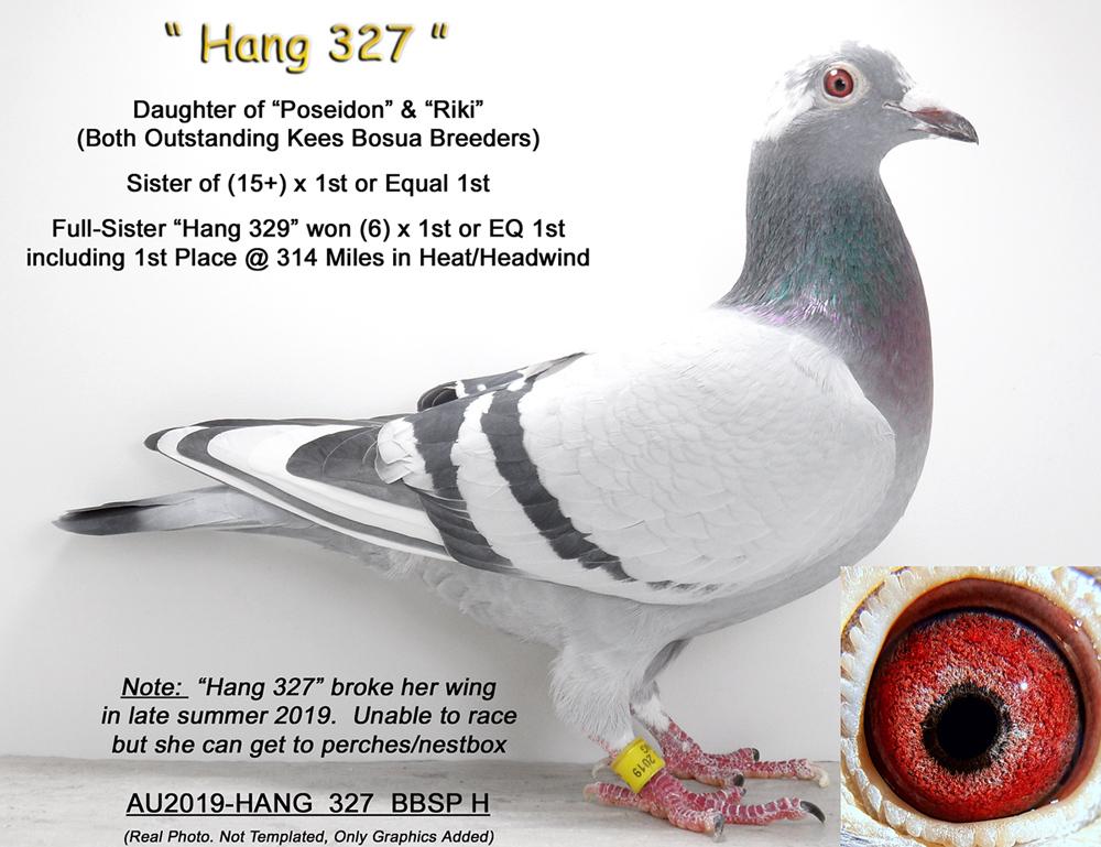 AU2019-HANG 327 BBSP Hen (Kees Bosua)
