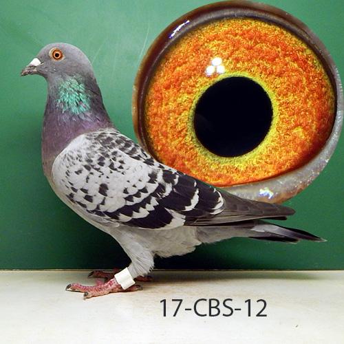 17-CBS-12 BC Hen. Rudi De Saer