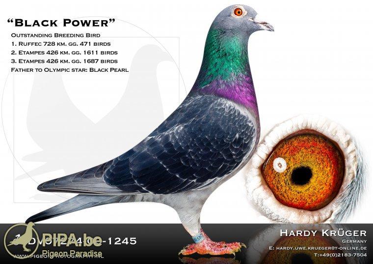 Grandchild of Black Power - Hardy Kruger