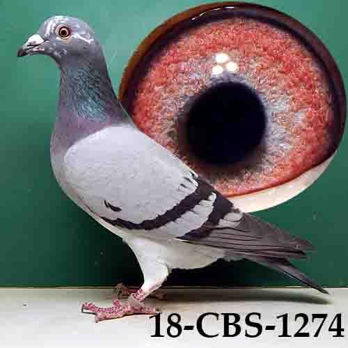 18-CBS-1274 BBSP Hen
