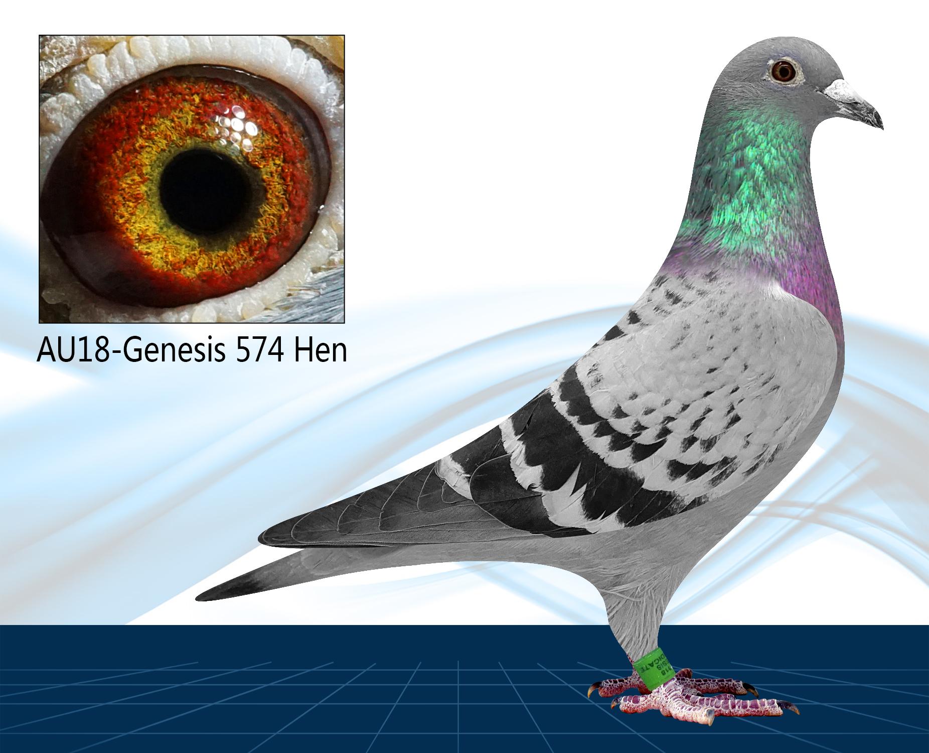 AU18-574(Hen) Alfon Klaas x Hardy Kruger