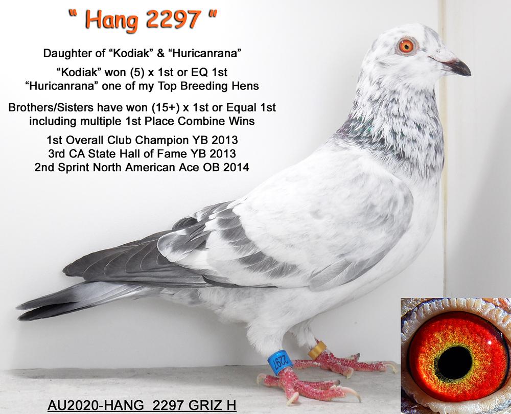 AU2020-HANG 2297 Grizzle Hen