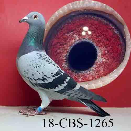 18-CBS-1265 LTCWF/HEN