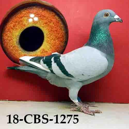 18-CBS-1275 BBWF C