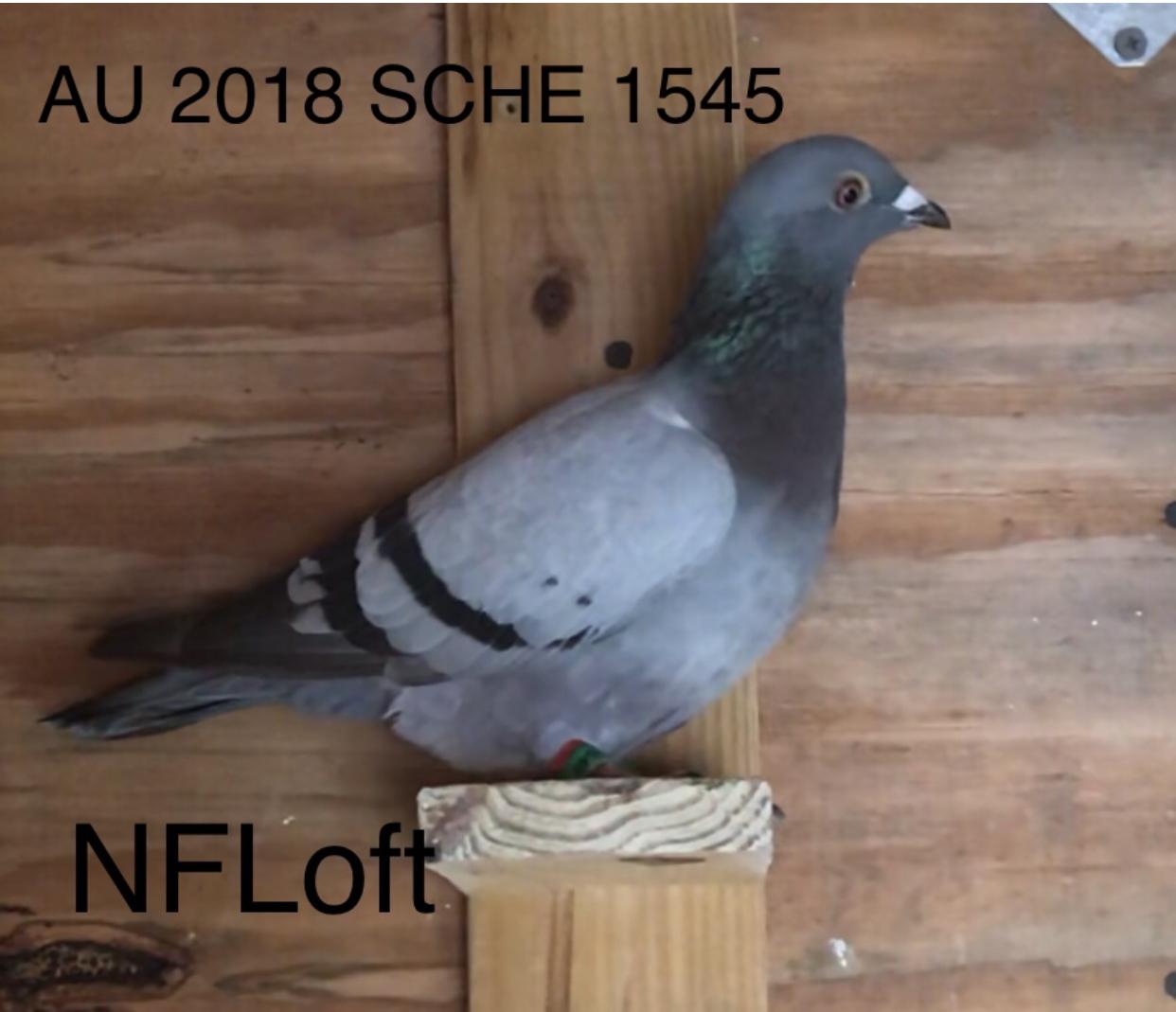 AU 2018 SCHE 1545 Nice Hofken Hen