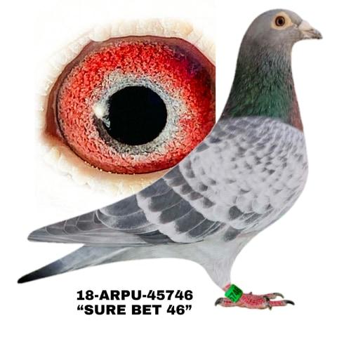 18-ARPU-45746 Cock.