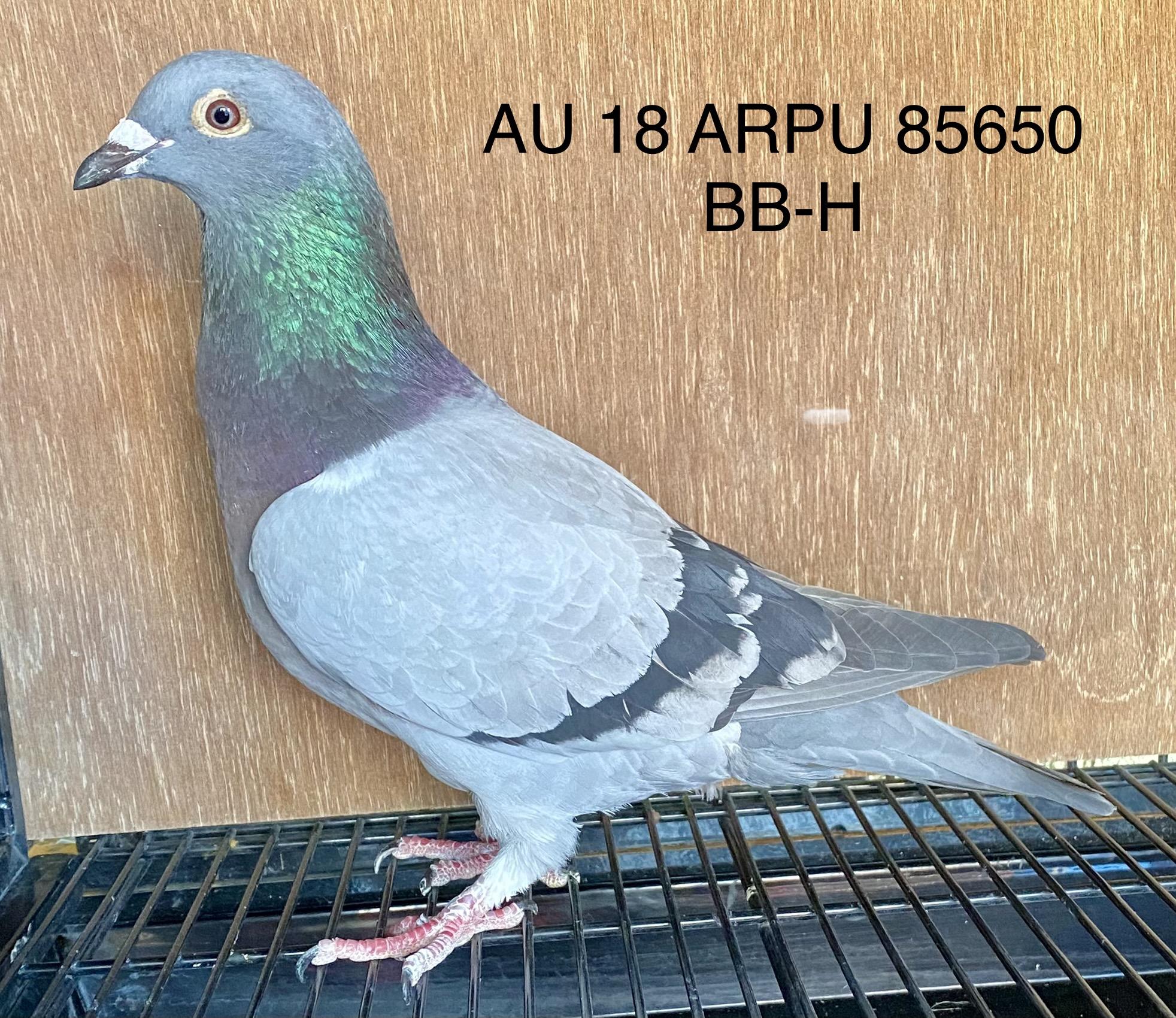 AU 18 ARPU 85650 BB-H