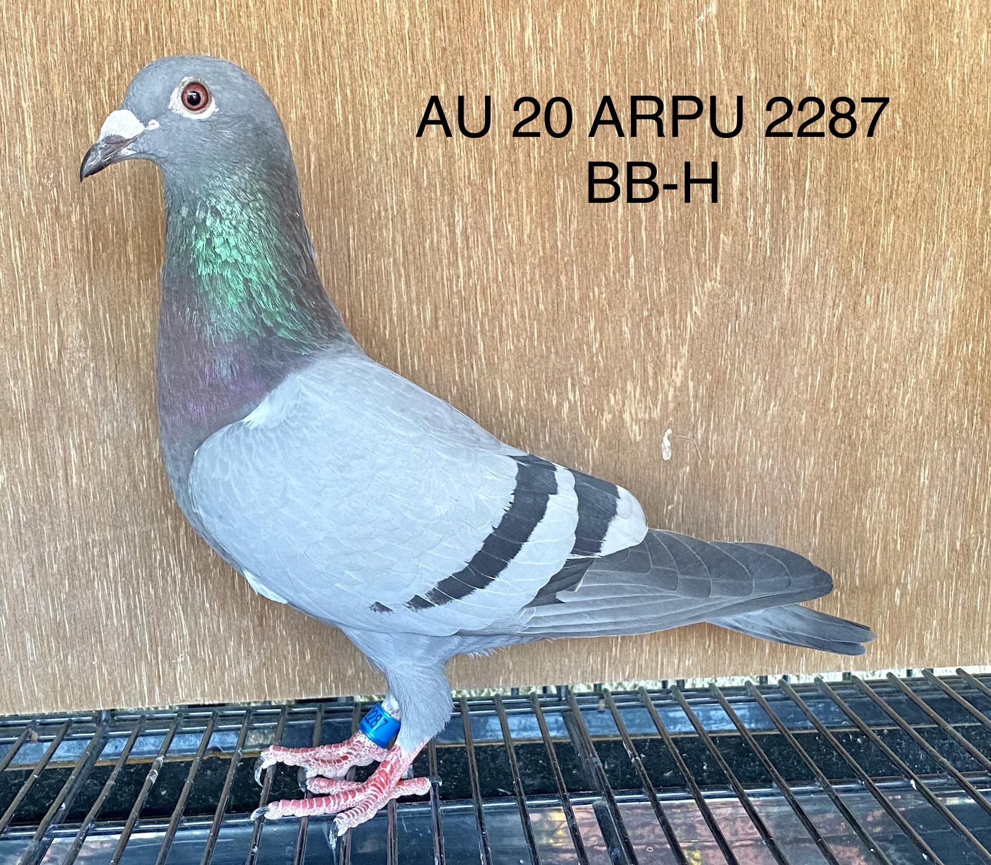 AU 20 ARPU 2287 BB-H