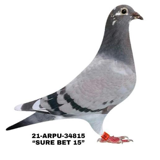 21-ARPU-34815BBWF Hen.