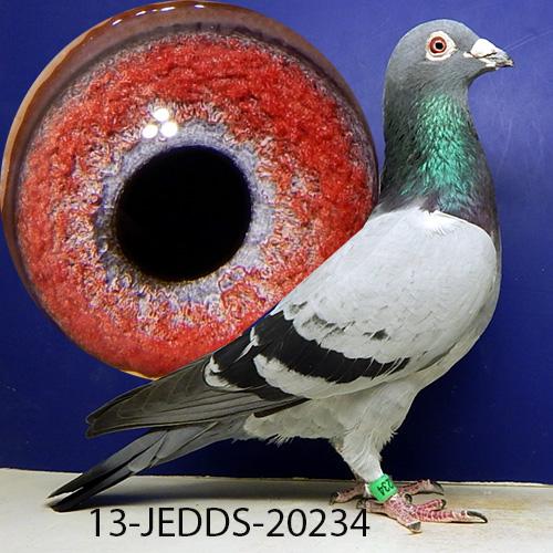 13-JEDDS-20234 Excellent cock